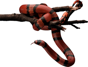 red-snake-png-7